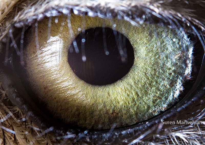 14 Extremely Detailed Close-Ups of Animal Eyes «TwistedSifter