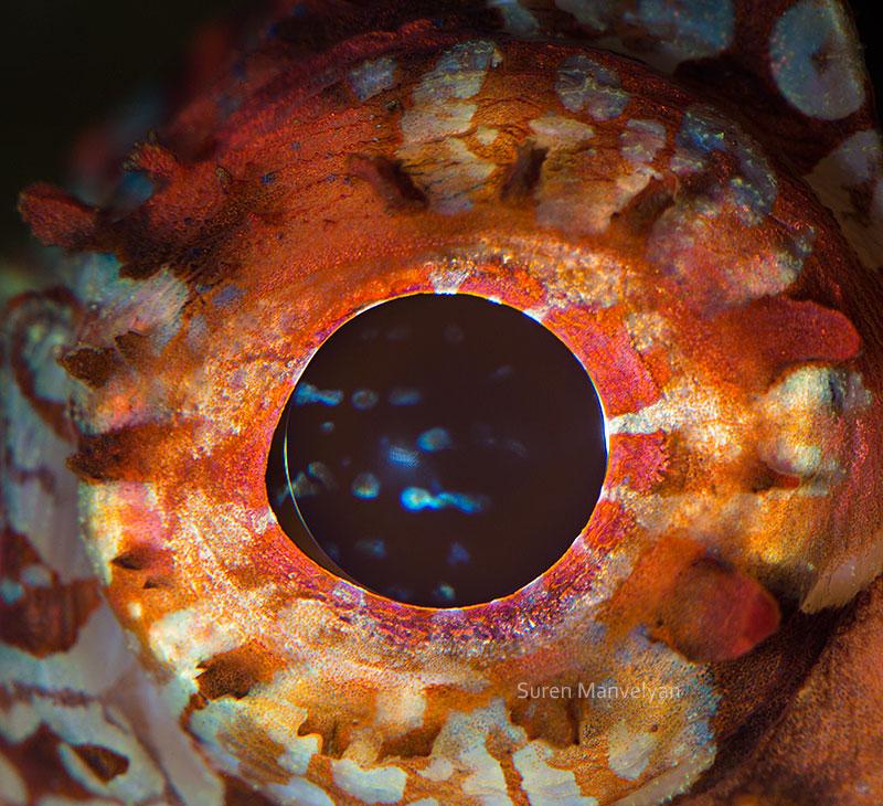 macro close-up photos of animal eyes by suren manvelyan (7)
