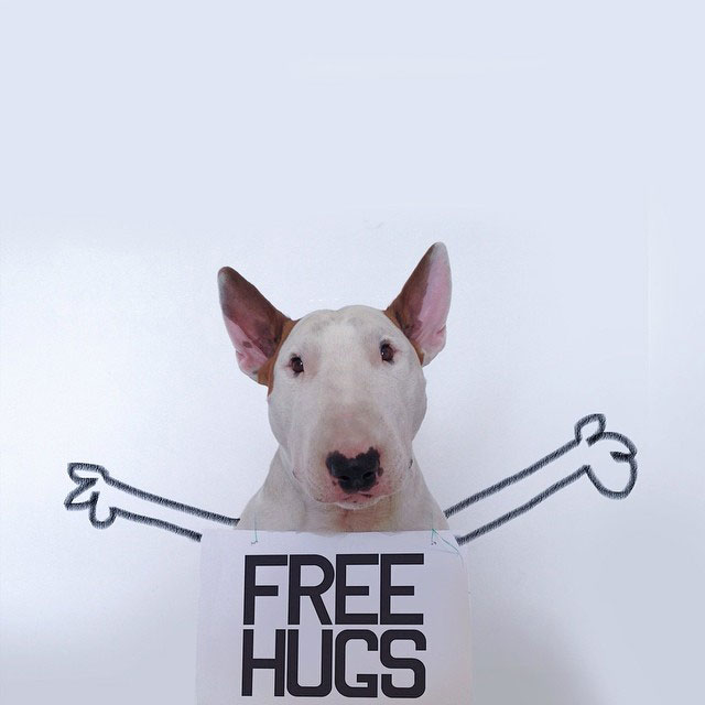 Rafael mantesso Takes Portraits of His Bull Terrier and Illustrates the Background (10)
