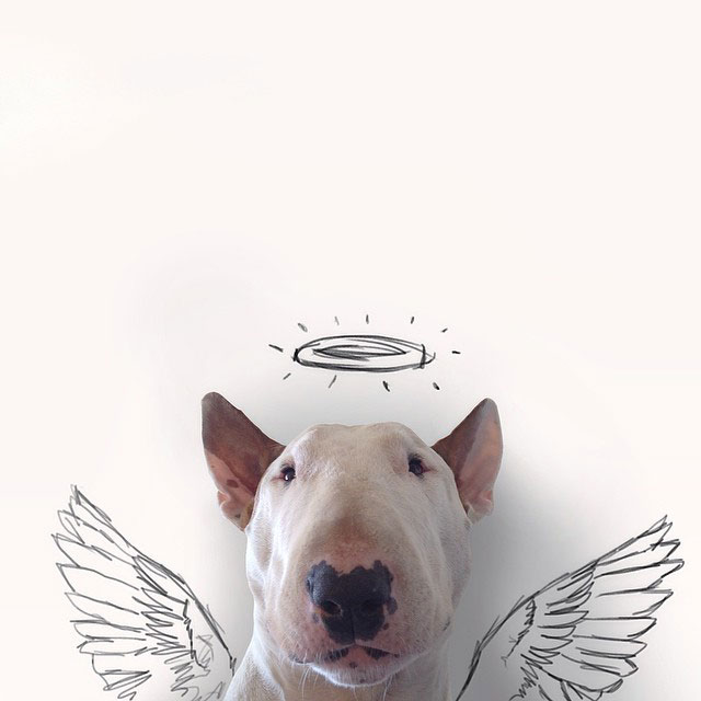 Rafael mantesso Takes Portraits of His Bull Terrier and Illustrates the Background (11)