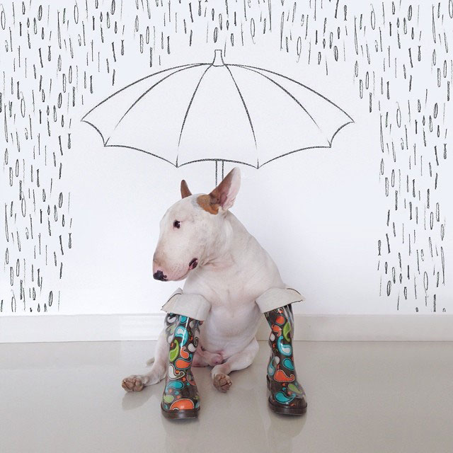 Rafael mantesso Takes Portraits of His Bull Terrier and Illustrates the Background (4)