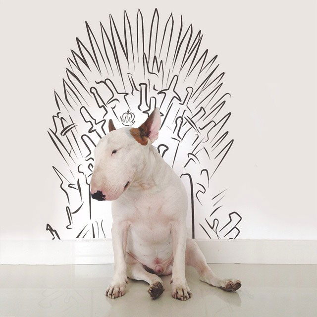 Rafael mantesso Takes Portraits of His Bull Terrier and Illustrates the Background (8)