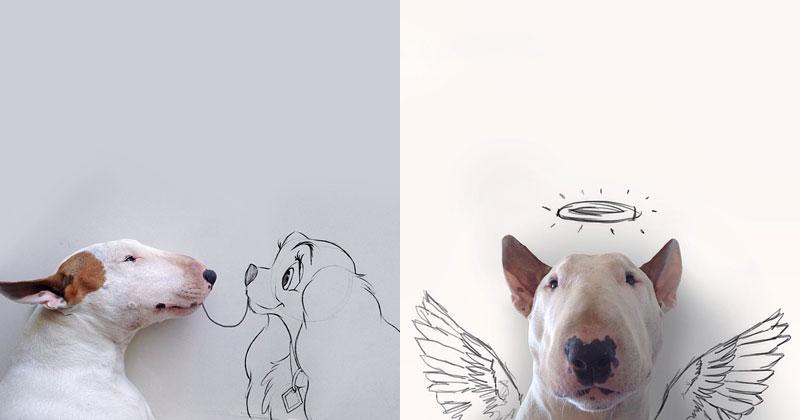 Artist Takes Portraits Of His Bull Terrier And Illustrates The - Bull terrier art