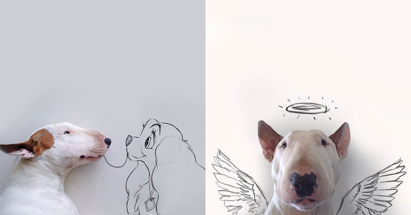 Artist Takes Portraits of His Bull Terrier and Illustrates theBackground