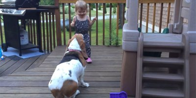 Rescued Basset Hound Finds New Best Friend