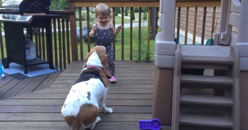 rescued-basset-hound-plays-with-toddler