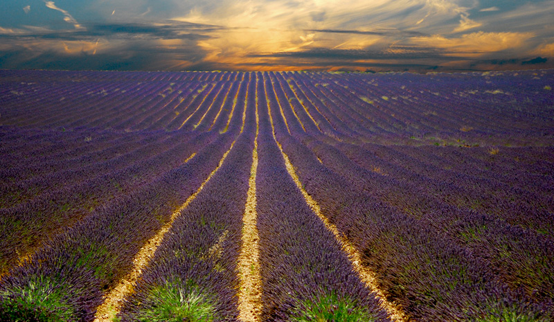 sunset lavender field provence france The Top 100 Pictures of the Day for 2014