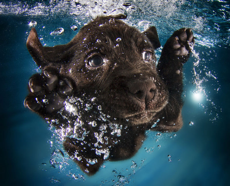 underwater puppies by seth casteel (10)