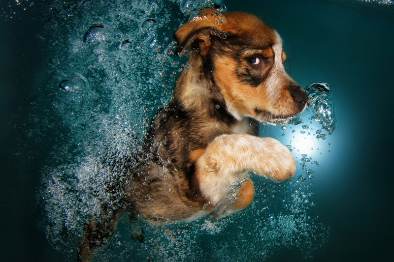 underwater puppies by seth casteel (3)
