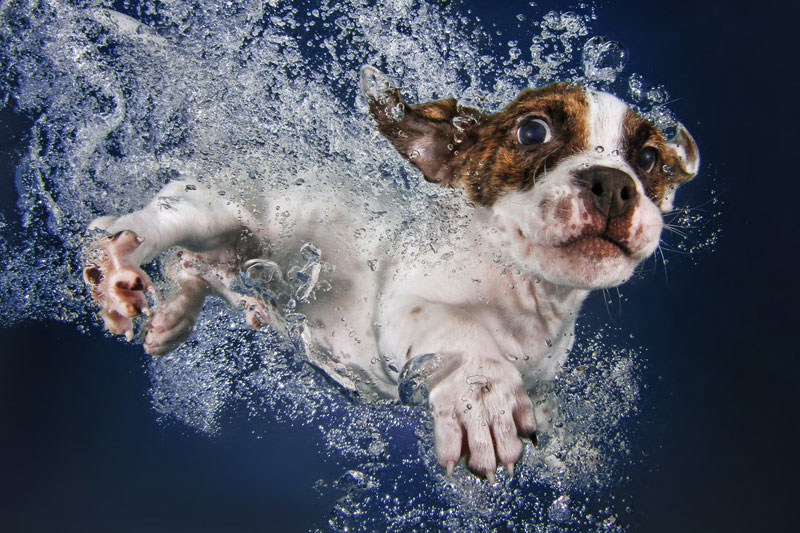 underwater puppies by seth casteel (6)