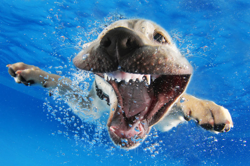 Underwater Photos of Puppies Diving Into Water