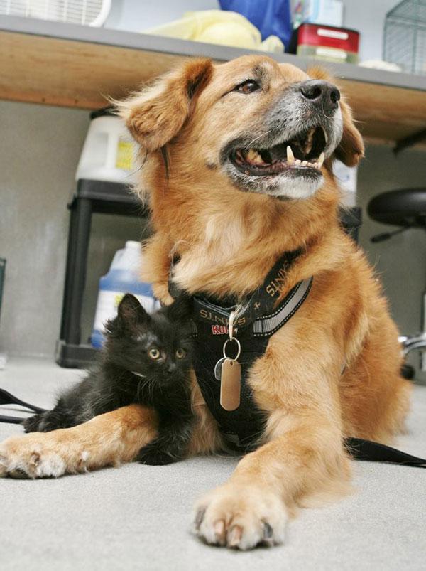 boots the kitten nanny arizona humane society (2)