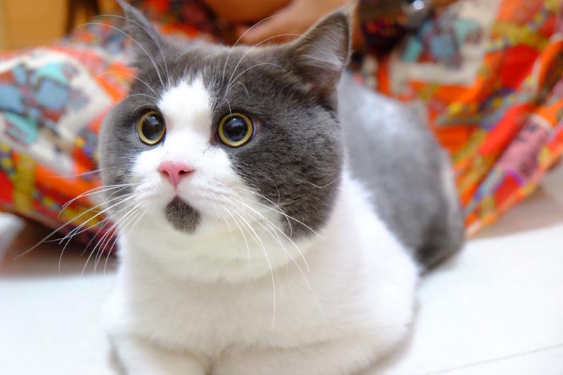 Cat S Pic