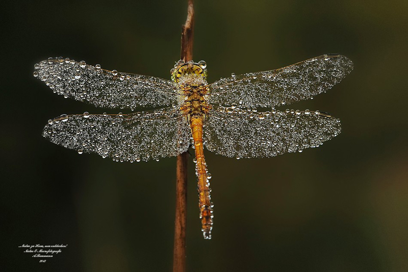 dragonfly with dew on it by andre baumann The Top 100 Pictures of the Day for 2014
