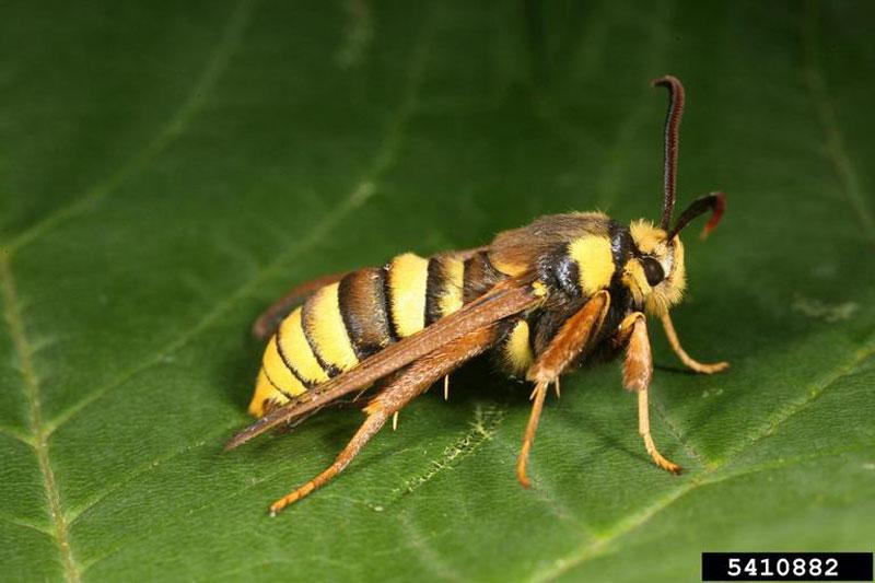 スズメバチの画像 p1_33