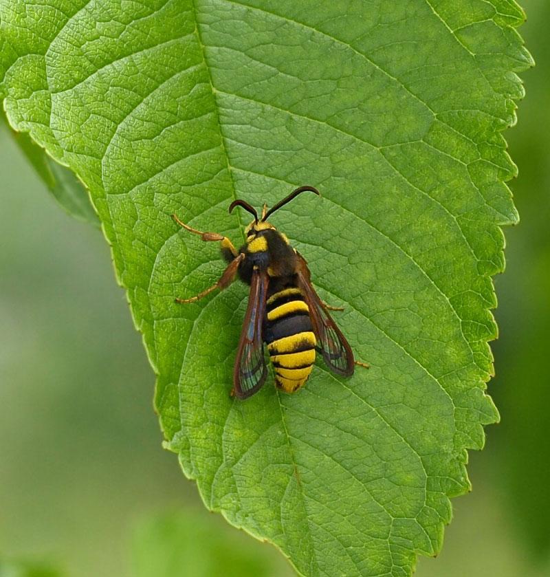 スズメバチの画像 p1_38