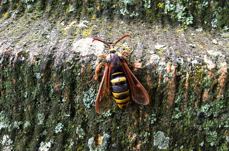 スズメバチの画像 p1_31