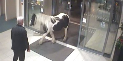 Just a Horse Wandering Into a Police Station