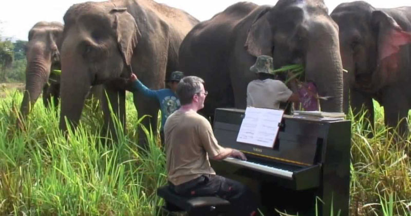 Musician Plays Beethoven for Rescued Group of Old and Injured Elephants