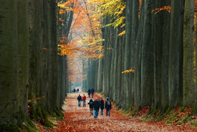 Sonian-Forest-Brussels-belgium-autumn-walk-path