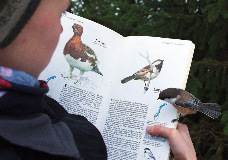 bird lands on page about itself in bird book Picture of the Day: Bird Lands on Page About Itself