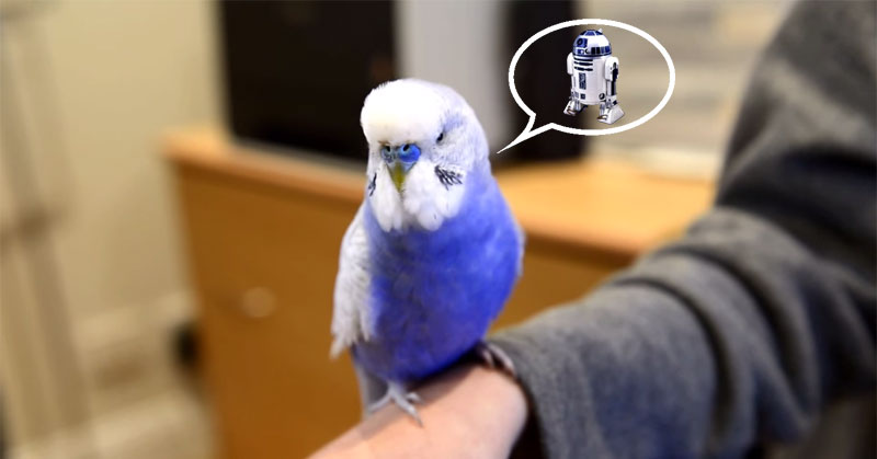 This Bird Talks Like R2D2