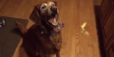 Dog is Adorably Bad at CatchingTreats