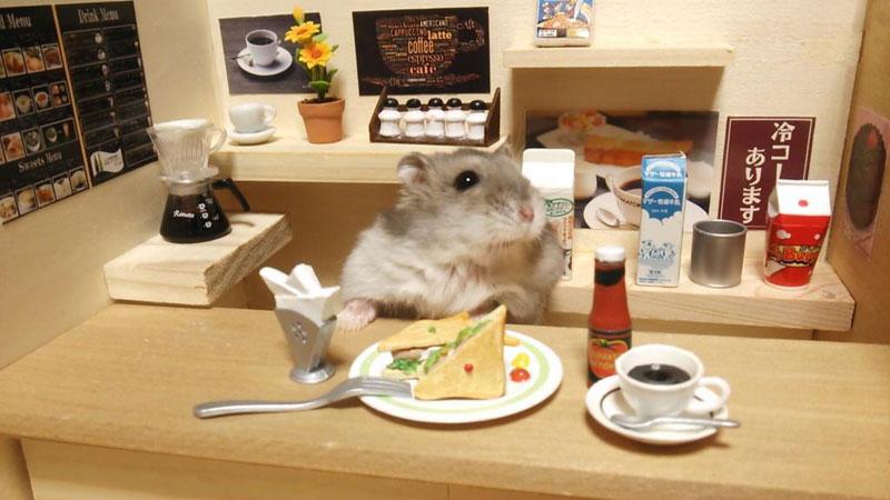 hamster shopkeepers (11)