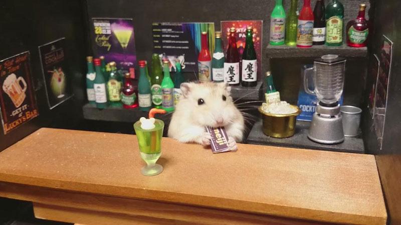hamster shopkeepers (13)