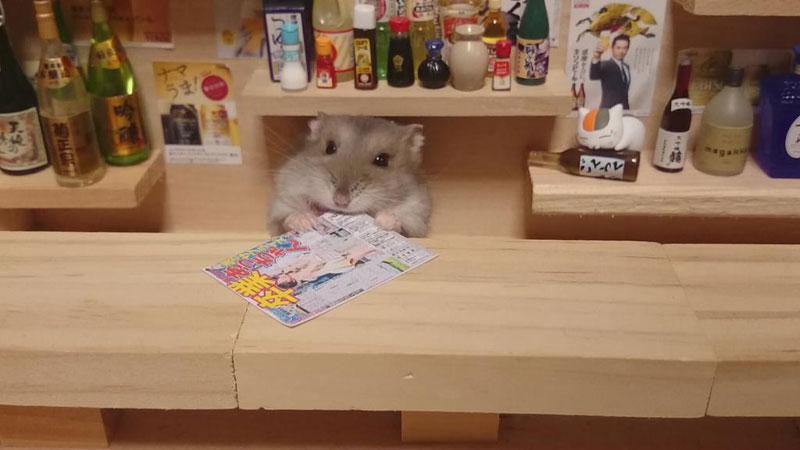 hamster shopkeepers (14)