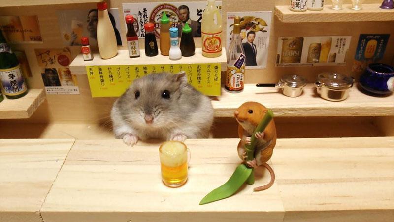 hamster shopkeepers (16)