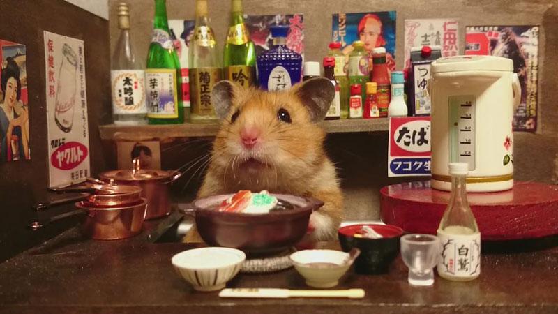 hamster shopkeepers (17)