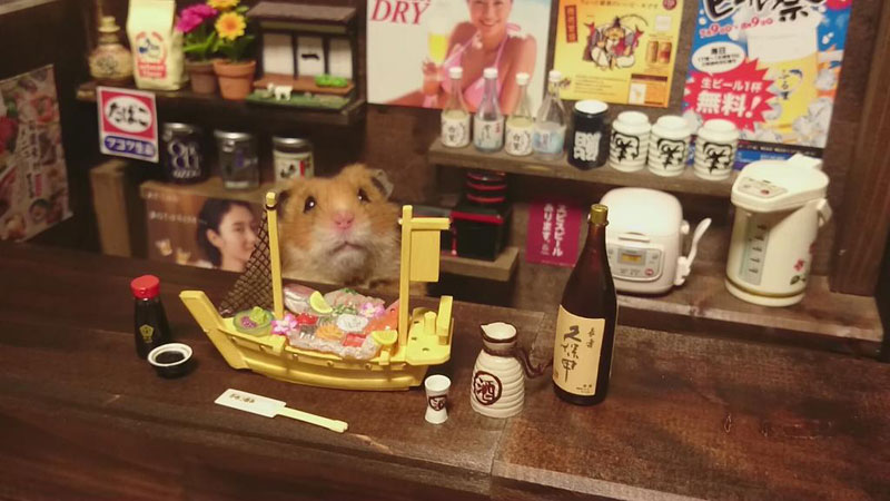 hamster shopkeepers (18)