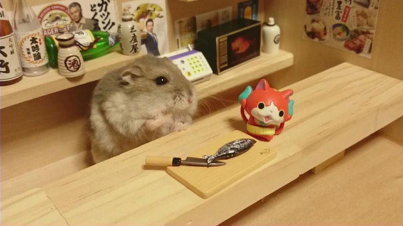 hamster shopkeepers (19)