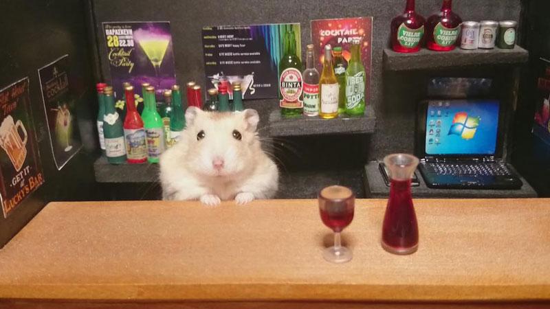 hamster shopkeepers (21)