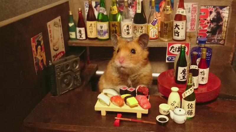 hamster shopkeepers (3)