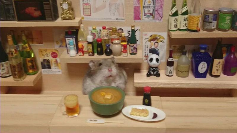 hamster shopkeepers (5)