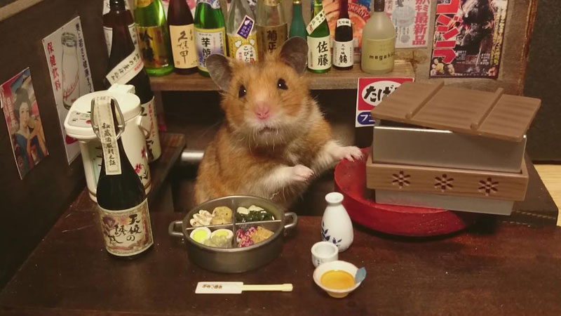hamster shopkeepers (7)