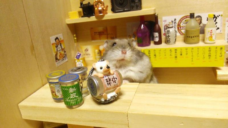 hamster shopkeepers (8)