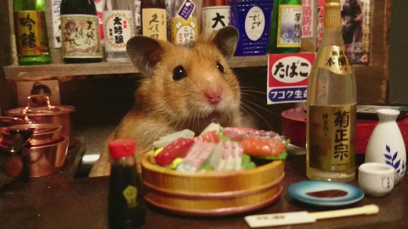 hamster shopkeepers (9)