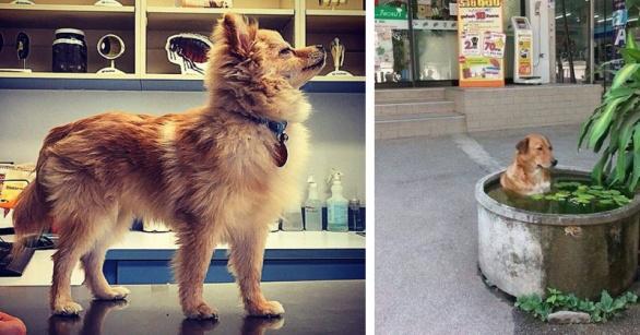 majestic-dog-chilling-dog