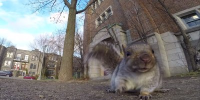 Squirrel Nabs GoPro, Carries It Up a Tree and DropsIt