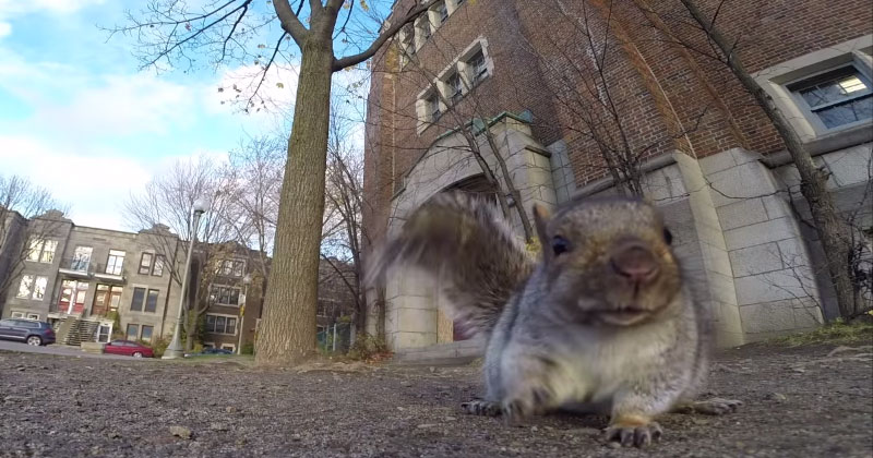 squirrel nabs gopro carries it up tree and drops it