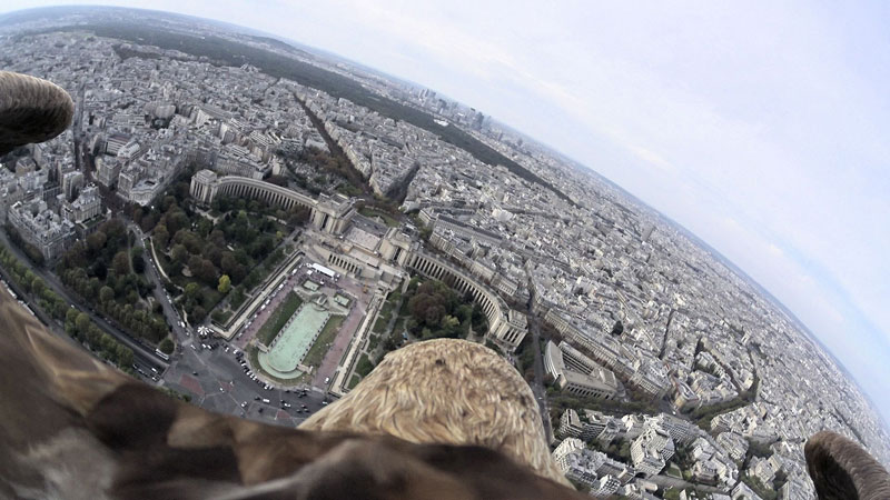what-paris-looks-like-from-an-eagles-POV