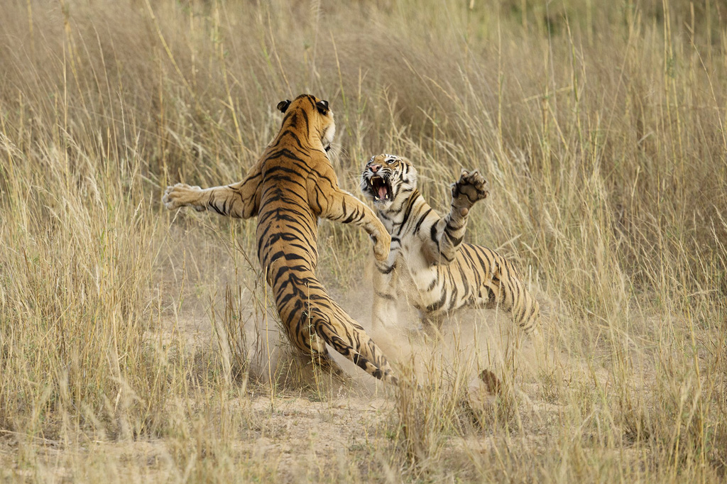 The Winners of the 2014 National Geographic PhotoContest