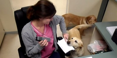 At This Vet Clinic, You Can Have a Dog Deliver YourReceipt