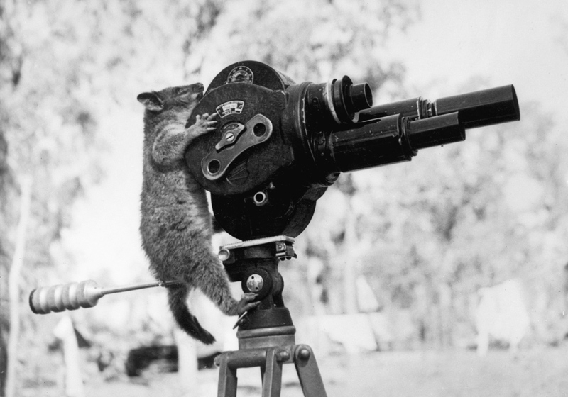 Picture of the Day: This Director isPossum