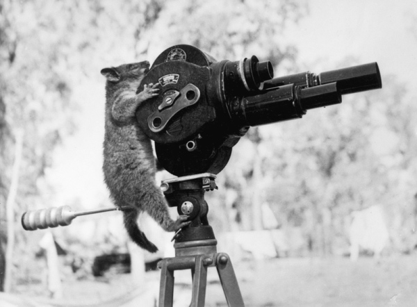 awesome-possum-taking-a-picture-behind-movie-camera-director-black-and-white-vintage