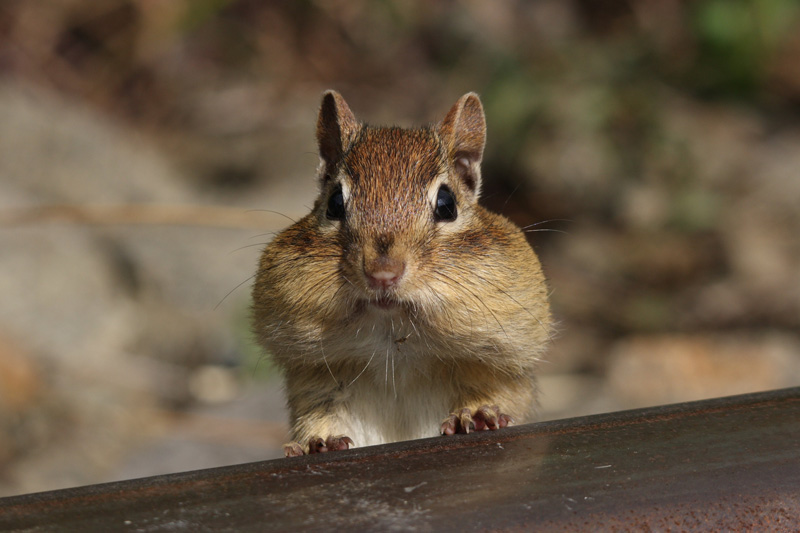 Picture of the Day: ChubbyCheeks