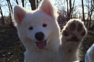 dog waving bye dog waving bye